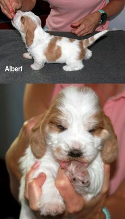 Albert_180818